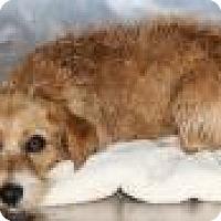 Adopt A Pet :: Becky - Madisonville, TN