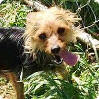 Adopt A Pet :: I'M ADOPTED Truffles - Oswego, IL