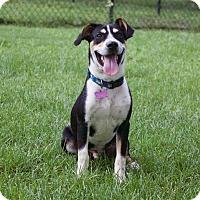 Adopt A Pet :: Trey - Berkeley Heights, NJ