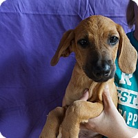 Adopt A Pet :: Azurite - Oviedo, FL