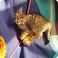 Adopt A Pet :: Reese - Richmond Hill, ON