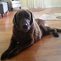 Adopt A Pet :: Darlene Clementine - Huntsville, AL