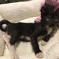 Adopt A Pet :: Spencer - Metairie, LA