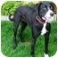 Photo 2 - Labrador Retriever Mix Dog for adoption in Berkeley, California - Stella