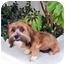 Photo 3 - Havanese Mix Dog for adoption in Los Angeles, California - SCARLETT ROSE