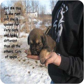 Great Pyrenees/Coonhound Mix Puppy for adoption in Webster, Minnesota - Morgan