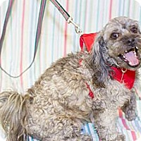 Adopt A Pet :: Frydy 2 yrs - Culver City, CA