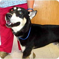 Adopt A Pet :: Pablo - Scottsdale, AZ