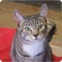 Adopt A Pet :: Genevieve - Montreal, QC