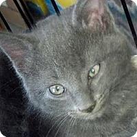 Adopt A Pet :: Smurf - Dallas, TX