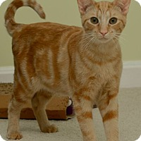 Adopt A Pet :: Costello - Reston, VA