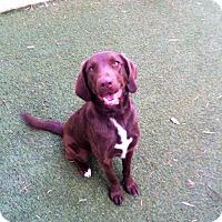Adopt A Pet :: Lucy - Cumming, GA