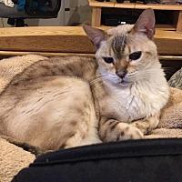 Adopt A Pet :: Gaby - Fairfax, VA