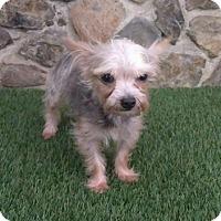 Adopt A Pet :: Camryn - Temecula, CA