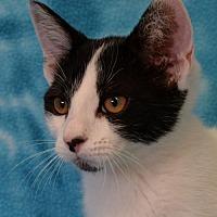 Adopt A Pet :: Simone - Eureka, CA