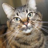 Adopt A Pet :: Charm - Victoria, TX