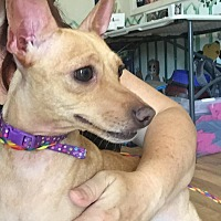 Adopt A Pet :: Ms. Bea - Okmulgee, OK