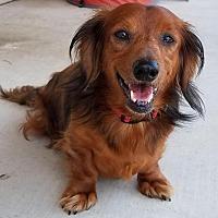 Adopt A Pet :: Leonardo (Leo) - San Antonio, TX