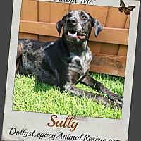 Adopt A Pet :: SALLY - Lincoln, NE