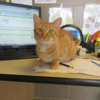 Adopt A Pet :: Damon - Wausau, WI
