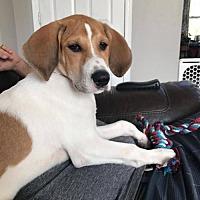 Adopt A Pet :: Petunia - Princeton, MN