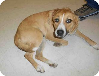 Cattle Dog Mix Dog for adoption in Yuba City, California - 9/19 Unnamed