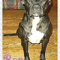 Adopt A Pet :: Snookeroo - Cincinnati, OH