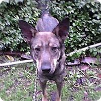 Adopt A Pet :: Sarah Jean - latrobe, PA