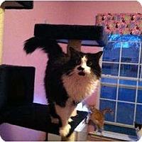 Adopt A Pet :: Angel - Mobile, AL