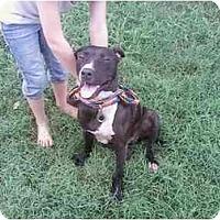 Adopt A Pet :: ebony - pikeville, NC
