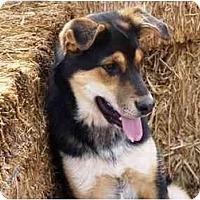 Adopt A Pet :: Juniper - YERINGTON, NV