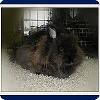 Adopt A Pet :: Aslan - Williston, FL