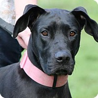 Adopt A Pet :: Lucy*ADOPTED!* - Chicago, IL
