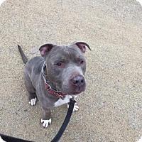 Adopt A Pet :: Frankie - Vernon Hills, IL