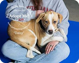 Terrier (Unknown Type, Small) Mix Dog for adoption in Union Springs, Alabama - Daisy