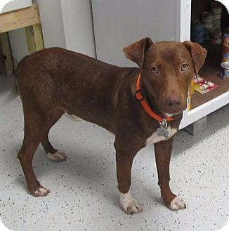 Labrador Retriever Mix Dog for adoption in Burgaw, North Carolina - Jasper