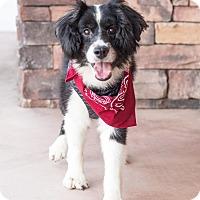 Adopt A Pet :: Tumbler - Chandler, AZ