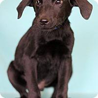 Adopt A Pet :: Carter - Waldorf, MD