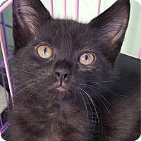 Adopt A Pet :: Tina - Key Largo, FL