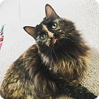 Adopt A Pet :: Zero - Baltimore, MD