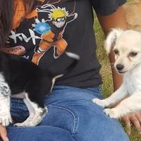 Adopt A Pet :: Winnie - Las Cruces, NM