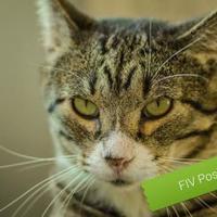 Adopt A Pet :: Phoenix - Carroll, IA