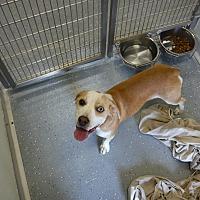 Adopt A Pet :: CARMAN - Sandusky, OH