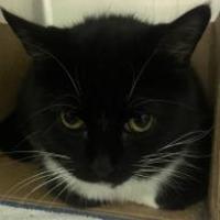 Adopt A Pet :: Jagger - West Olive, MI