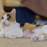 Adopt A Pet :: Maia - Lakewood, CO