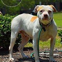 Adopt A Pet :: Gizzie - Golsboro, NC