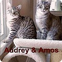 Adopt A Pet :: Audrey - Medway, MA