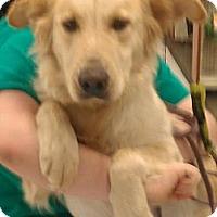 Adopt A Pet :: Truffles - Phoenix, AZ