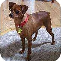 Adopt A Pet :: Rojo - Minneapolis, MN