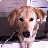 Adopt A Pet :: KELSO - Dennis, MA